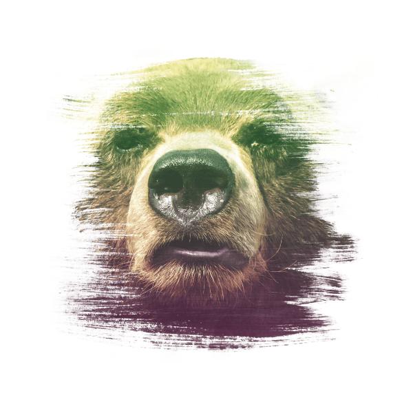 The Real Bear Design – Megfizethető weboldal mindenkinek!
